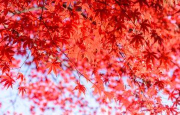 pixta 26773661 S 360x230 - 草津温泉で紅葉をたのしめる貸切りペンション4選!草津の絶景と温泉を満喫