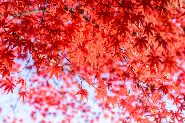 pixta 26773661 S - 草津温泉で紅葉をたのしめる貸切りペンション4選!草津の絶景と温泉を満喫