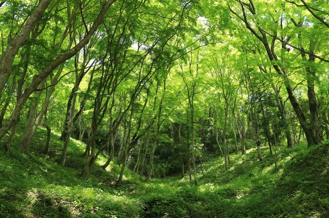福島県 会津若松市 飯盛山