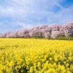 pixta 28842968 S 150x150 - 埼玉観光の人気おすすめスポットランキングTOP10!お土産や名物についても【最新版】