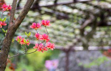 pixta 21875751 S 360x230 - 強羅温泉のおすすめ観光名所ランキングTOP10|グルメランチ情報も【2017年版】