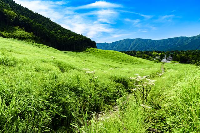 箱根 仙石原 草原