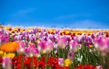 pixta 29428057 M 360x230 - 那須高原・那須温泉のおすすめお土産ランキングTOP5!地元の名物は?【最新版】
