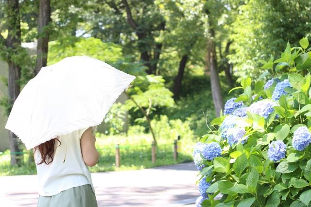 榊原温泉 紫陽花