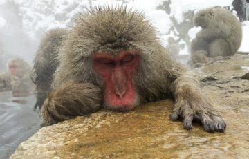 1fddccf99b713de16414f14ae922e144 s 360x230 - 湯田中温泉の人気おすすめ日帰り温泉ランキングTOP9