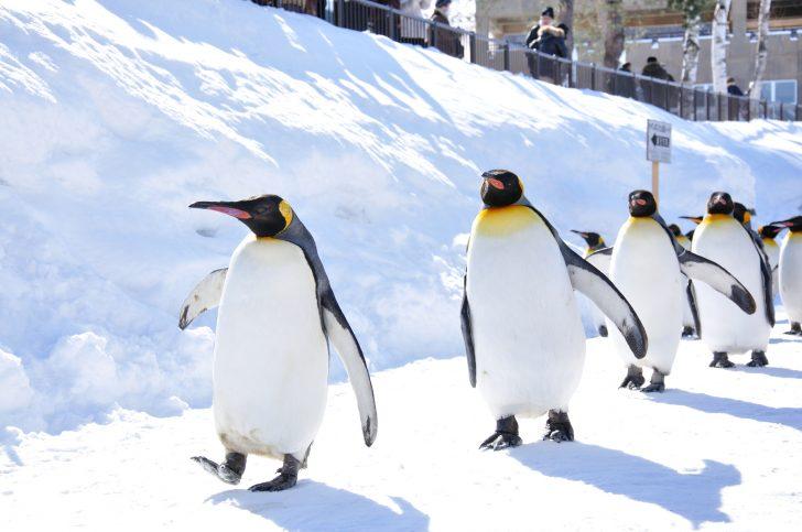 旭川 ペンギン