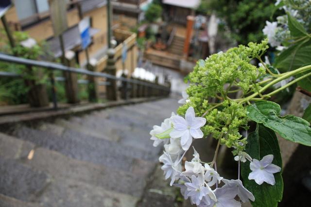 渋温泉 参道 花