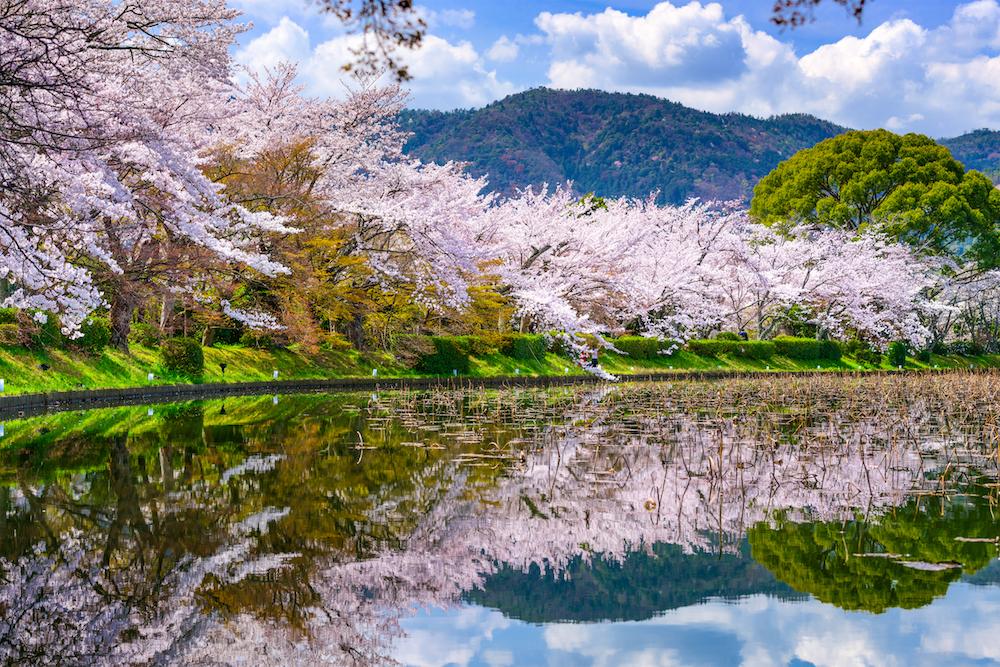 京都 嵐山 桜