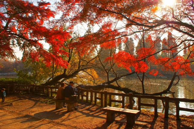 井の頭公園 秋
