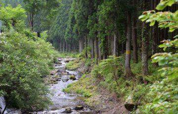 洞川温泉 ハイキング
