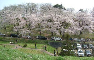 800px Cherry blossoms akayu 2005 04 360x230 - 赤湯温泉が人気の3つの理由!旅館や観光情報から名物グルメ&お土産についても