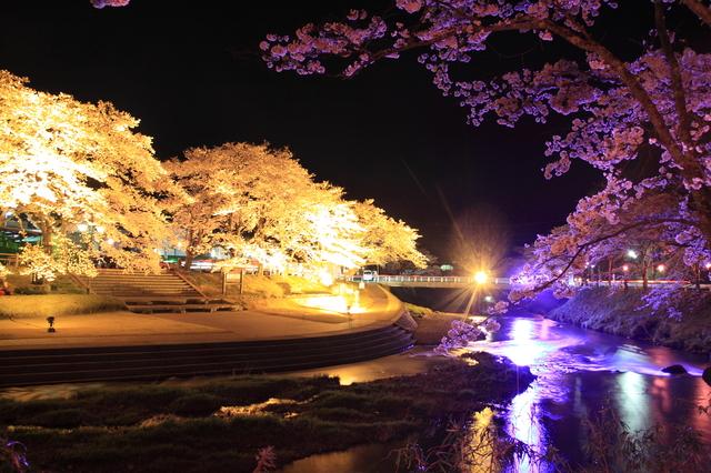 福島県 石川郡 夜桜