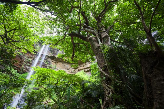 沖縄県 ピナイサーラの滝