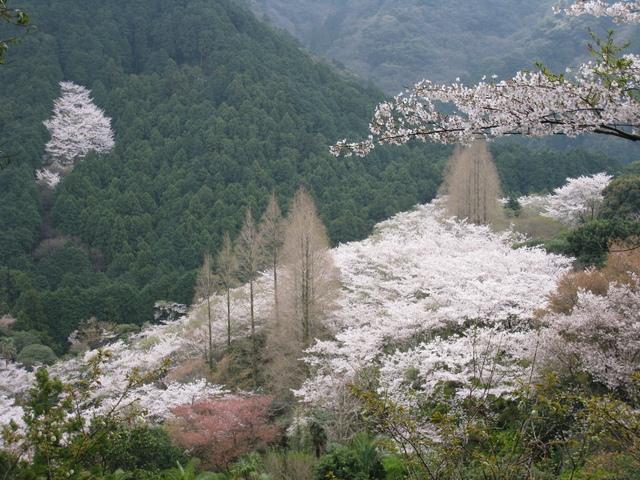 福岡県古賀市 興山園