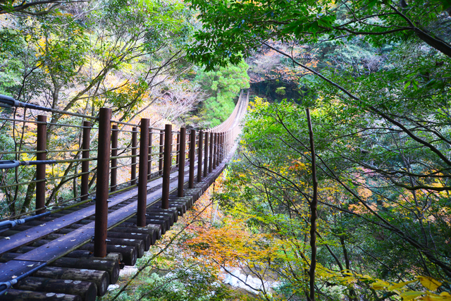 樅木の吊り橋 五家荘