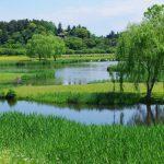 偕楽園の月池