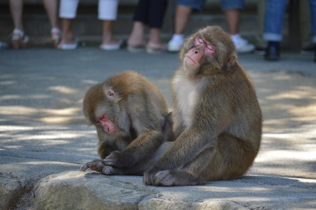 大分県 大分市 高崎山自然動物公園 別府温泉