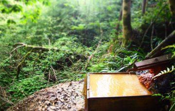 P8141730 360x230 - 銀色から黄金色へ!島根県の冷たい秘湯に行ってみた